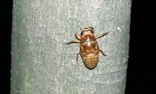 幼虫の木登り
