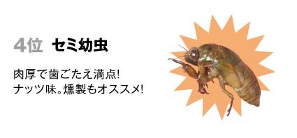 4 セミ【幼虫】:肉厚で歯ごたえ満点。ナッツ味。燻製もオススメ。