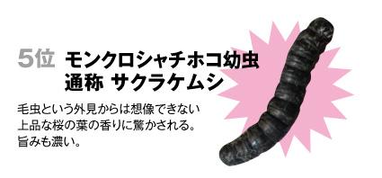 5 モンクロシャチホコ【幼虫】(通称=サクラケムシ):毛虫という外見からは想像できない上品な桜の葉の香りに驚かされる。旨みも濃い。