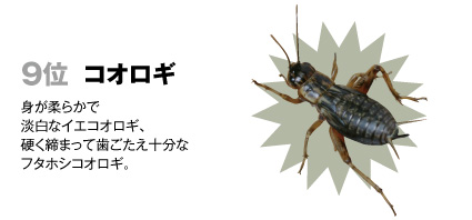 9 コオロギ(ヨーロッパイエコオロギ、フタホシコオロギ):身が柔らかで淡白なイエコ、硬く締まって歯ごたえ十分なフタホシ